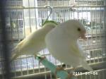 pepino para el aviario